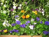 11花壇の花1