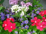 9月の花壇1