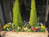 2月エントランス入口花壇の花