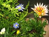 2月の花壇の花2