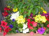 5花壇の花1