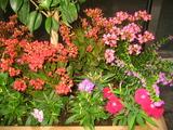 10花壇2
