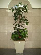 10正面観葉樹