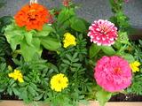 7月の花壇の花2