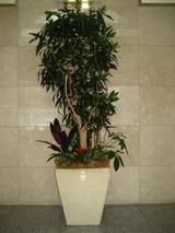 1の正面観葉樹