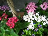 9月の花壇2