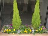 1月の花壇