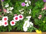 11月の花壇の花1
