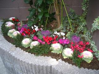 2011年元旦の三角花壇