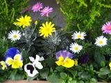 1月の花壇1