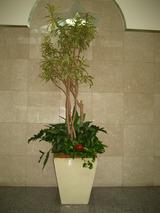 9正面観葉樹