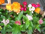 8月の花壇2