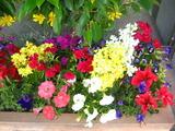 5花壇の花2