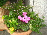 花壇脇の花