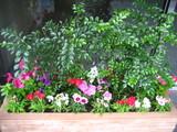 10月左花壇