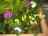 2の花壇の花2