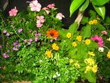 10月の花壇2