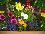 5月の花壇2