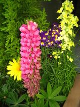 4月花壇の花2