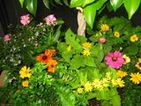 10月の花壇1
