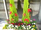 12花壇の花1