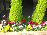 2012.12花壇の花2