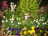 3月の花壇の様子