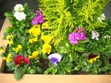 2の花壇の花1