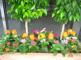 8月の花壇1