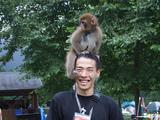 Tomoさん猿
