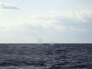 クジラブロー
