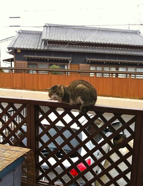 雨ねこ The Rain Cat