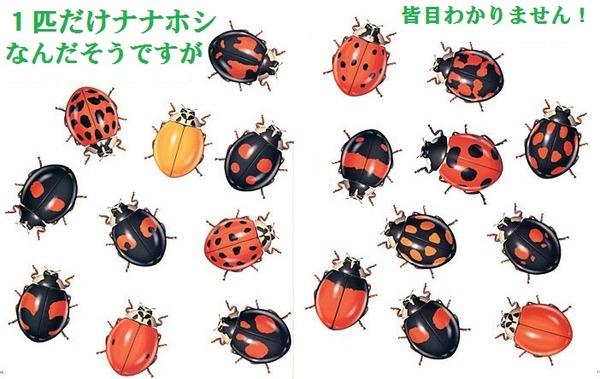 ladybug1-10