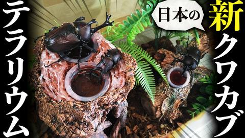 日本のクワカブクワリウム2