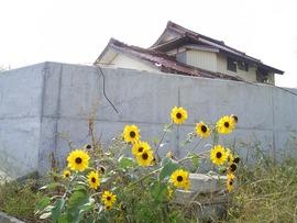 崩壊した家屋と道端の花