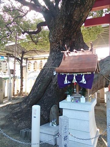 石津神社 神木と小祠