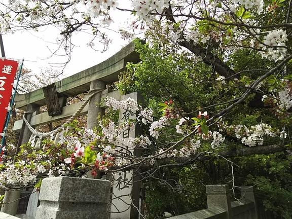 春日神社 鳥居と社号標