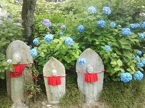 金剛山寺 紫陽花