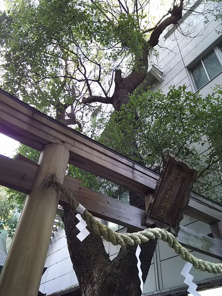 少彦名神社 鳥居と神木