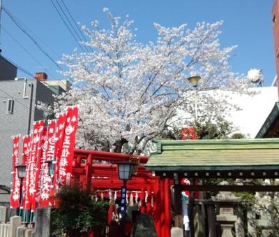 30大須桜1