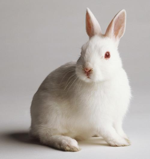 10ウサギ