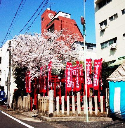 31 大須桜2015 1