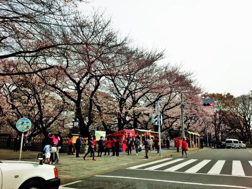 11名古屋城桜