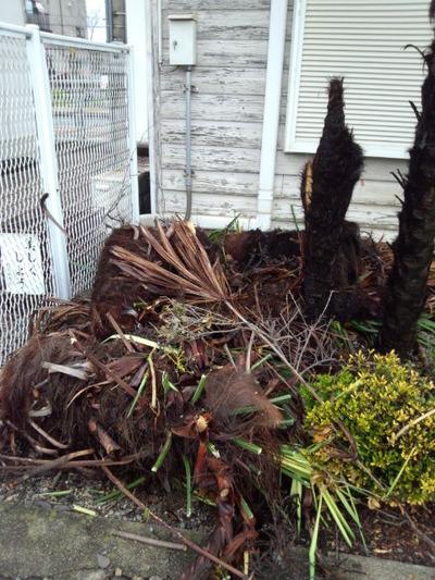 24被害木2