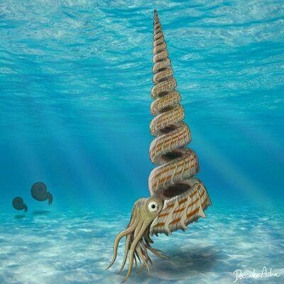 新種 アンモナイト 古生物 化石 北海道 エゾセラス に関連した画像-01