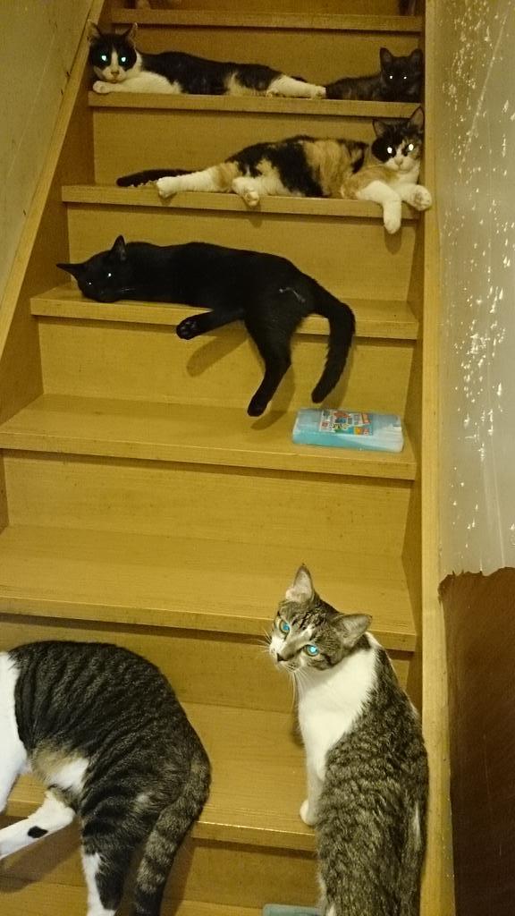 猫 階段に関連した画像-03
