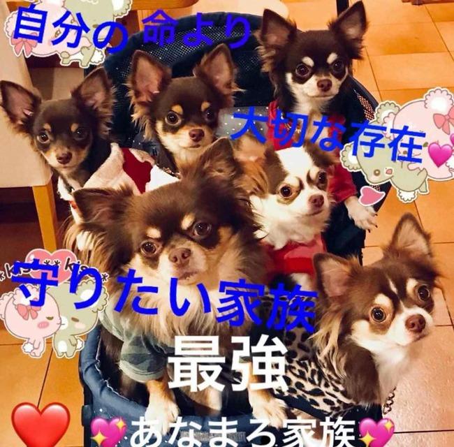 犬 死亡 熱中症 SNSに関連した画像-02