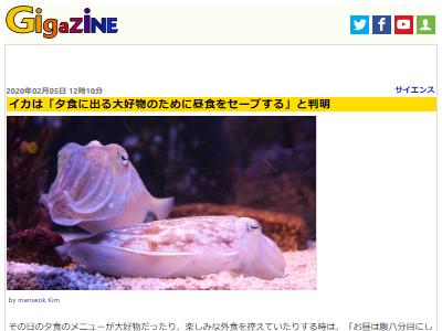イカ 好物 夕食 昼食 セーブ 実験 研究に関連した画像-02