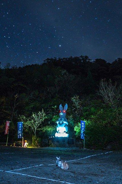 お寺 ウサギ 観音 住職に関連した画像-02