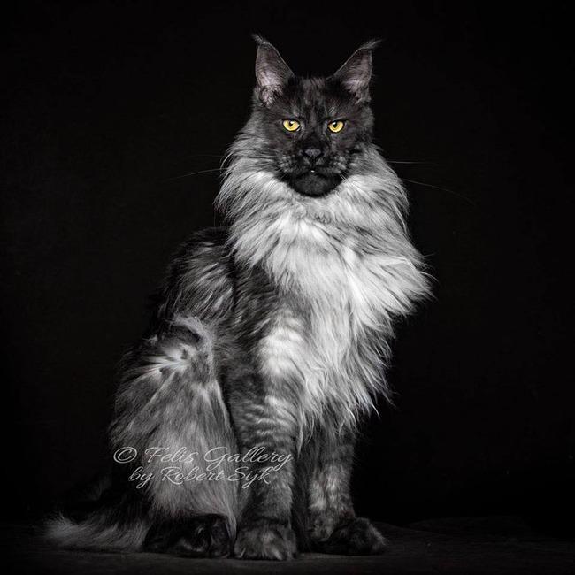 人面 猫 気高き猫に関連した画像-04